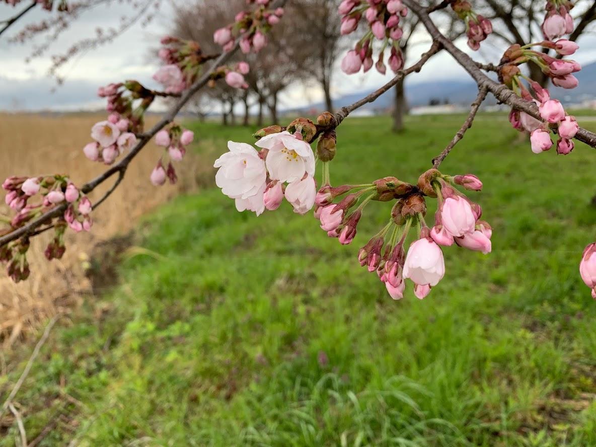 春のお知らせ